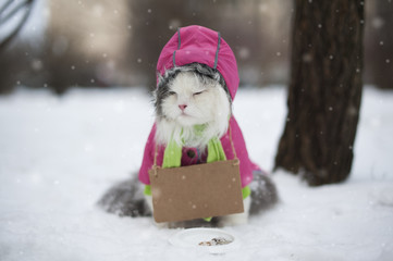 Cat asks for help in winter