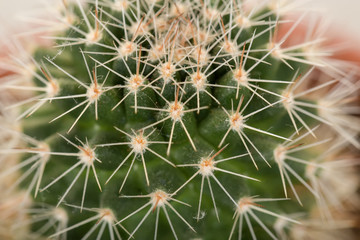 Quills and prickly cactus spines