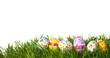 Easter eggs - 61342506