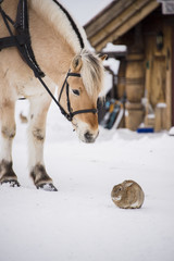 Horse and rabbit