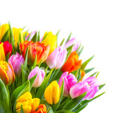 Fotoroleta Tulpenstrauß vor weißem Hintergrund