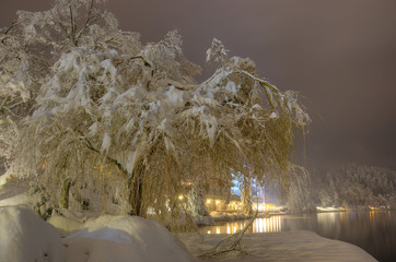 Snowbound tree on the bank of Lake Bled in Winter snowy night