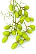 neem, azadirachta indica, plante médicinale