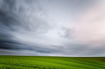 Albero singolo su prato verde con cielo nuvoloso