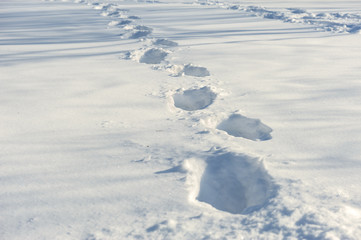 tracks on the snow