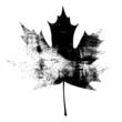Grunge Maple Leaf - Black