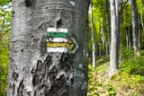 green, yellow and white hiking trail signs