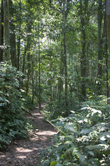 Jungle path in Cuc Phuong National Park in Vietnam