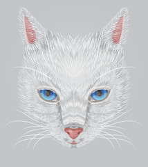 Face of a white cat with expressive blue eyes