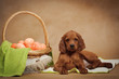 Puppy and basket with easter eggs