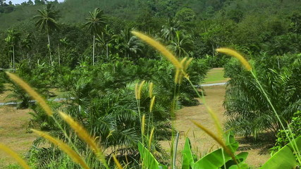 View of the palm trees