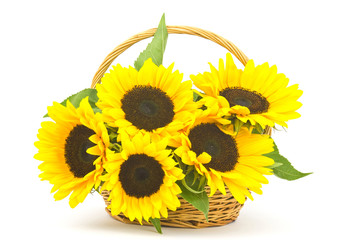 Beautiful sunflower bouquet in a basket (Helianthus)