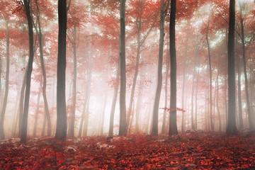 Fantasy forest © robsonphoto