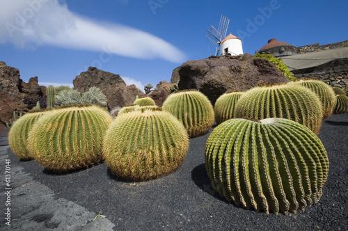 Fotobehang Cactus Cactus garden, Lanzarote