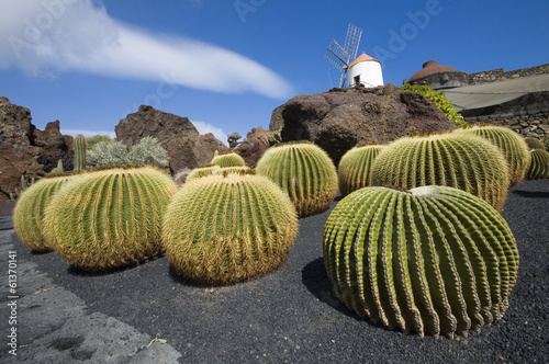 Canvas Cactus Cactus garden, Lanzarote