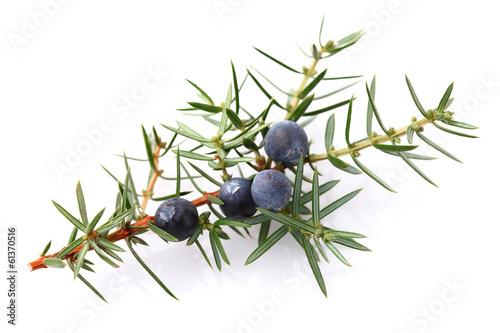 Fotobehang Planten Juniper berry