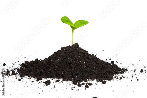Heap dirt with a green plant sprout isolated