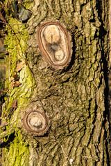 Corteccia e nodi d'albero