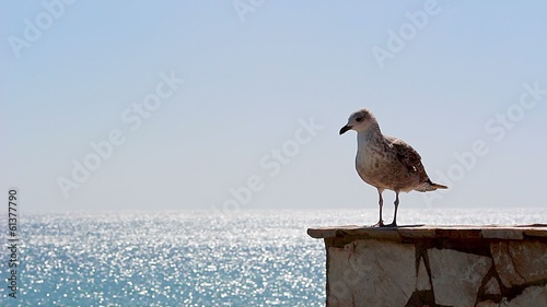 Young seagull standing on a wall
