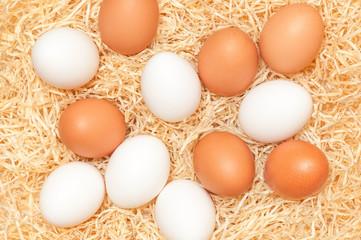 Weiße und braune Eier im Nest, Eierproduktion, Lebensmittel