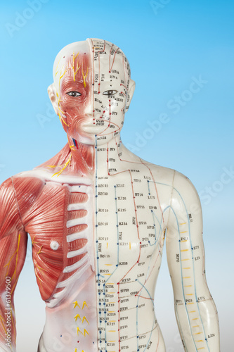 Acupuncture Dummy