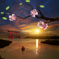 Beautiful flowering Japanese cherry