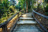 path in woods, chiangmai Thailand