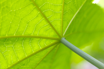 beautiful green leaf in nature. macro