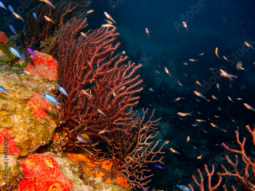 details from reefs in the caribbean sea.