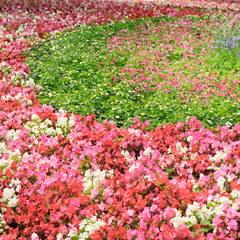 flower bed with bright summer flowers