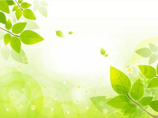 GIB0207 봄 프레임 나뭇잎