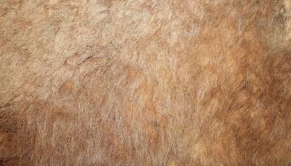 real lion textured pelt
