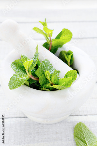 green mint in white mortar
