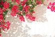 Bougainvillée rose, mur blanc