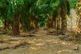 At an oil palm estate
