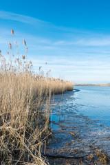 Fringe of reeds on the banks