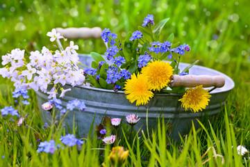 Frühlinswiese