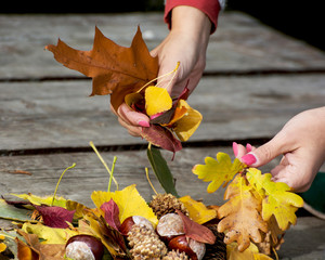 Autumn leaves in female hands