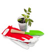 tomato seedling, garden shovel and gloves