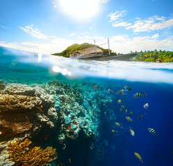 Beautiful underwater world on a sunny day at Apo Island. Philipp