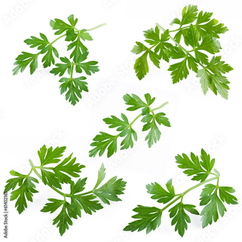 collection of fresh parsley on white background