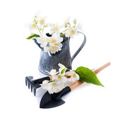 Jasmine flowers and garden tools. gardening