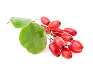 Barberry with leaves isolated on a white background
