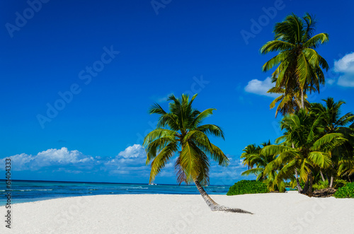 canvas print picture Tropical sandy beach with palm trees, Dominican Republic