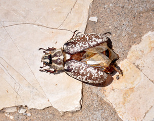 beetle on the floor