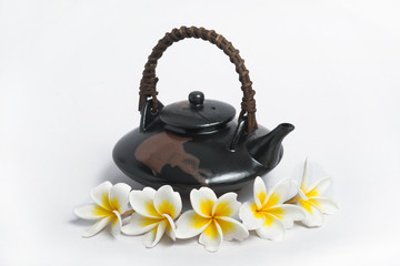 Plumeria cup of tea