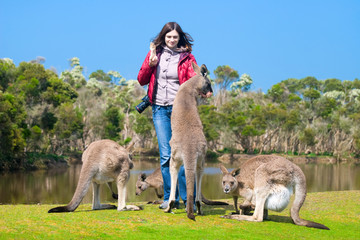 Beautiful young woman feeding kangaroos in Phillip Island Wildli