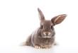 canvas print picture - kaninchen