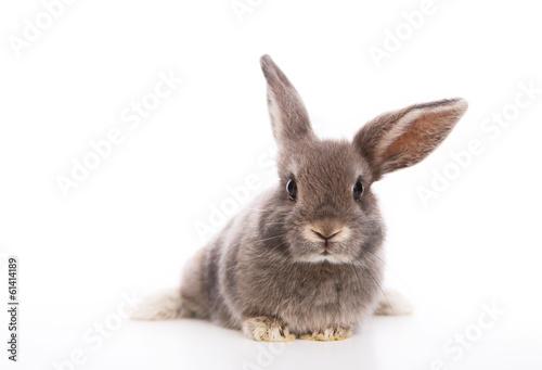 canvas print picture kaninchen
