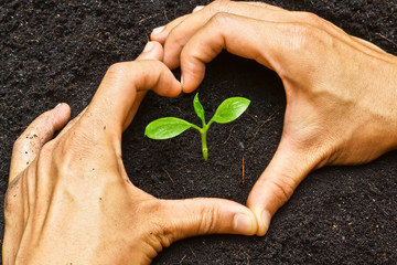hands forming a heart shape around a young green plant